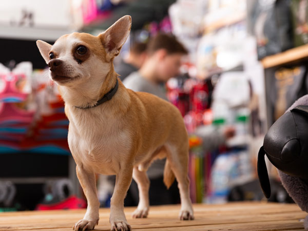Local Pet Shops and National Online Pet Supply eCommerce Stores